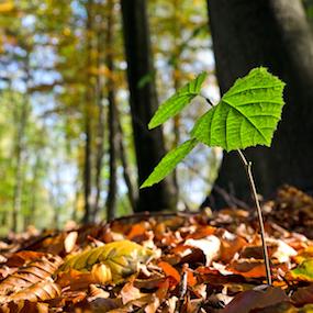 森林保護・土壌浄化